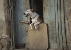 Cubana Production Service Cuba Mood Photography street dog