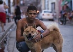 Cubana Production Service Cuba Havana Photo  dog