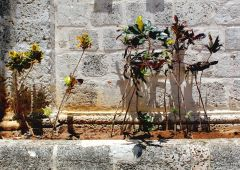 Cubana Production film Service Cuba Habana Photo  flower
