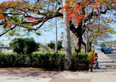 Cubana Production film Service Cuba Habana Photo tree